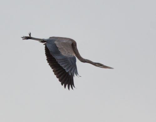 heron_takeoff4_blog