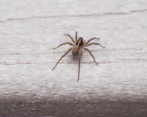 spider1_bblog