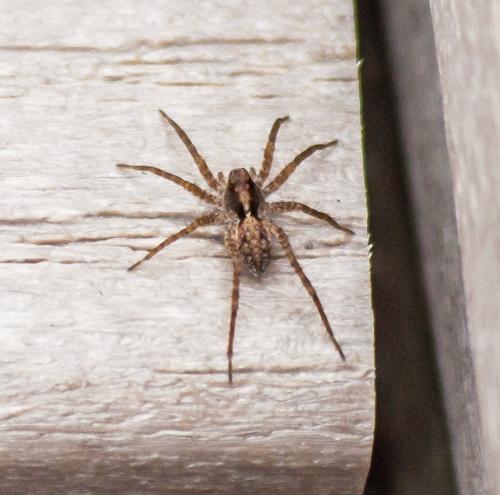spider2a_blog