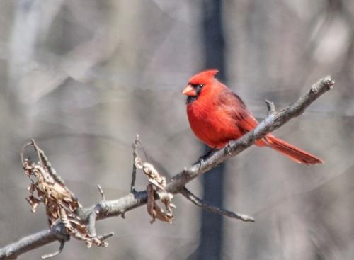 cardinal_march_blog