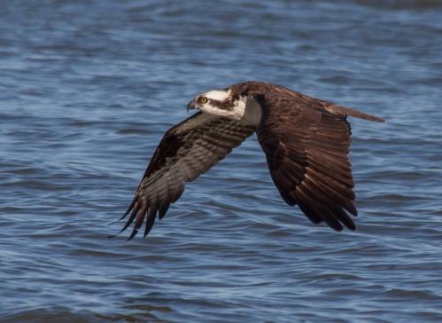 osprey_flight_blog