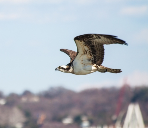 osprey_soar_blog