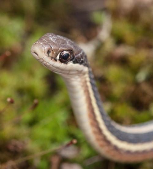 snake4_march_blog