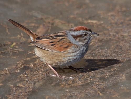 sparrow_shadow_28Feb