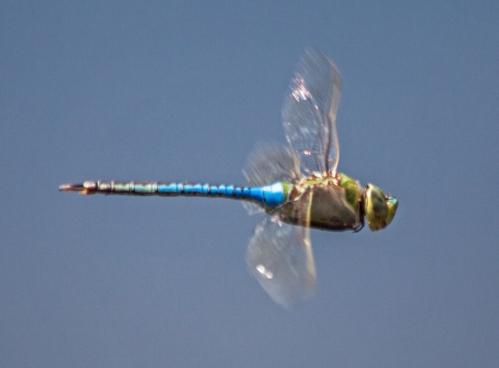 dragonfly_flight_blog