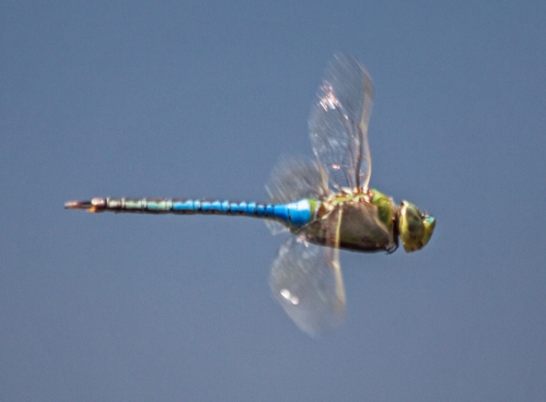 dragonfly_flight_blog