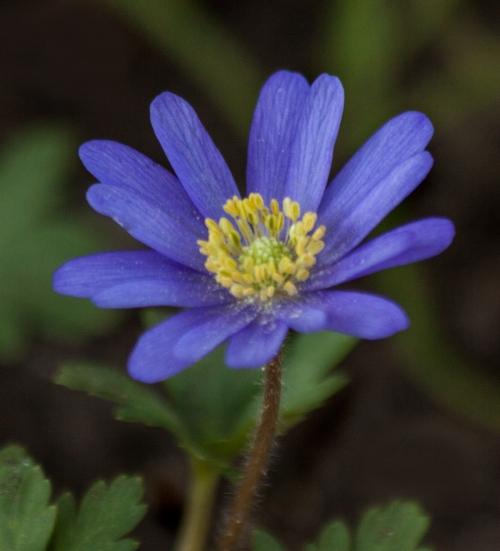 flower_tiny_blog