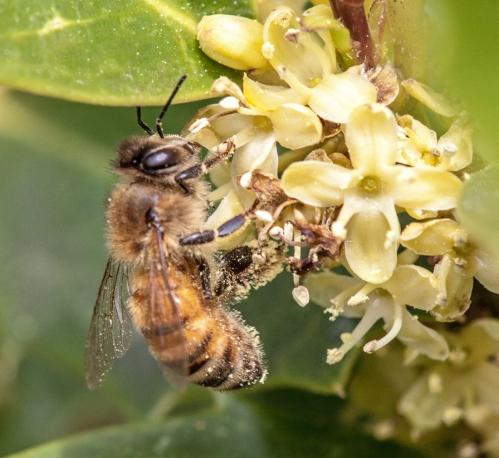 honeybee3_blog