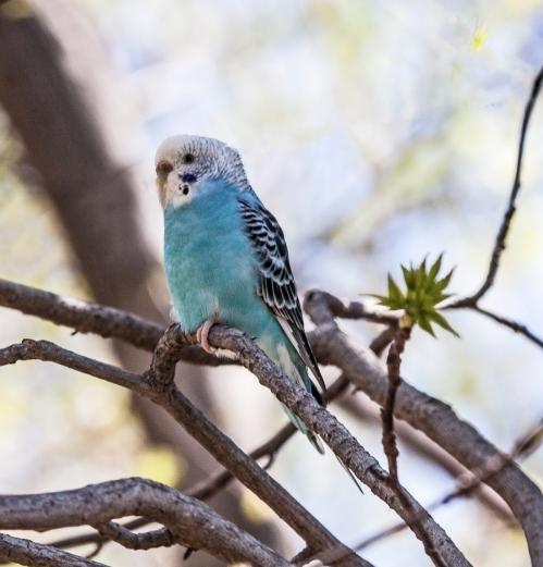 parakeet_21_April_blog