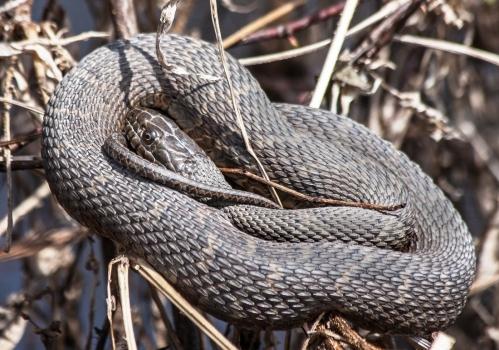 snake_coil_blog