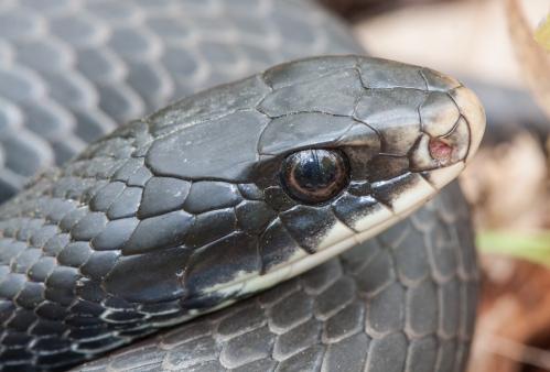 snake_reflection2_blog