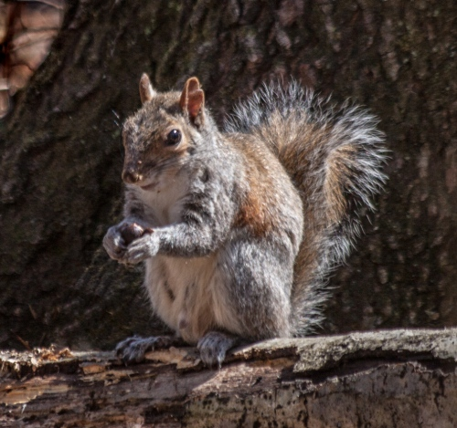 squirrel1_spring_blog