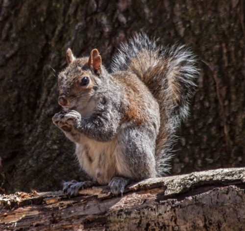 squirrel2_spring_blog