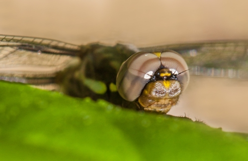 dragonfly_eyes_blog