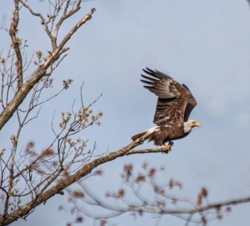eagle_takeoff1_blog