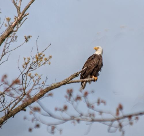 eagle_takeoff2_blog