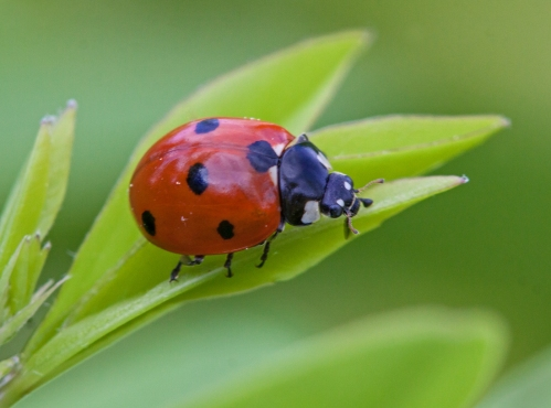 ladybug_may_blog