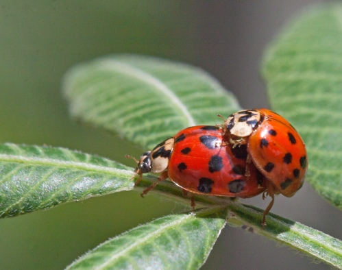 ladybug2_love_blog
