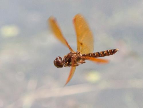 amb2_fly_blog