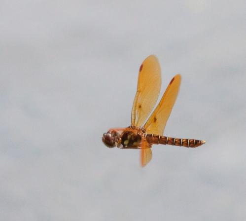 amb3_fly_blog