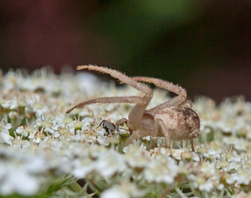 crab2_blog