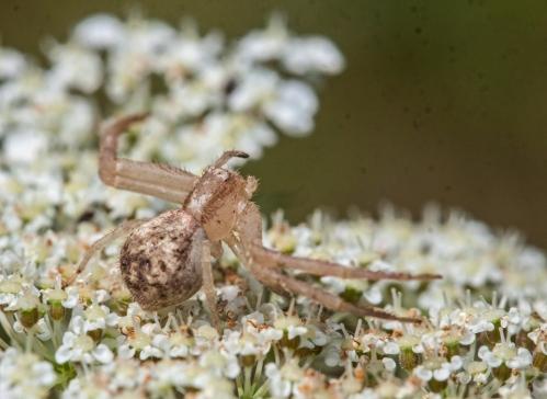 crab4_blog