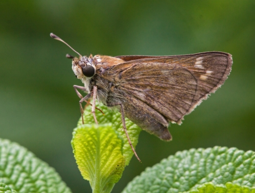 skipper1_blog