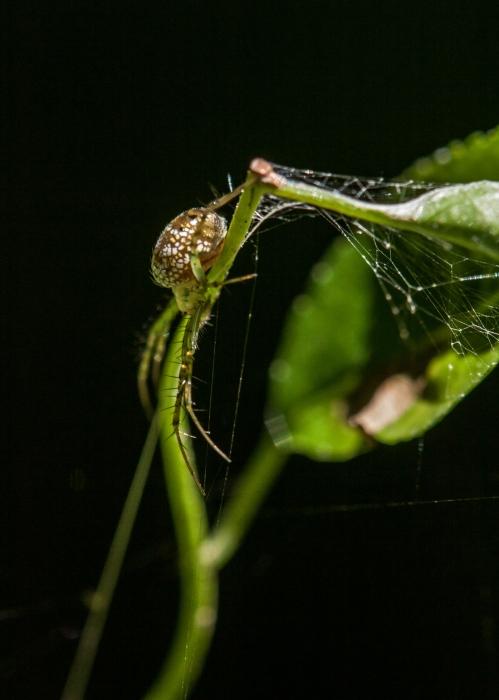 spider1_small_blog