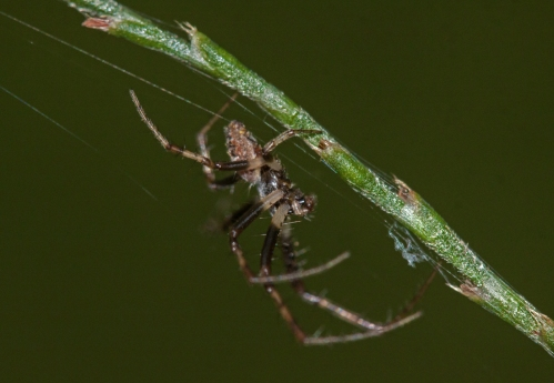 spider2_small_blog
