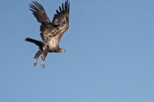 eagle1_blog_sep