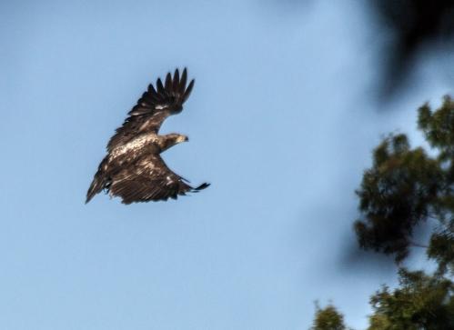 eagle2_blog_sep