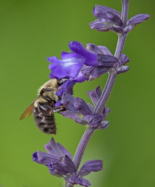 October bee