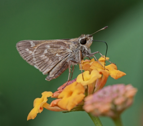 skipper1_oct_blog