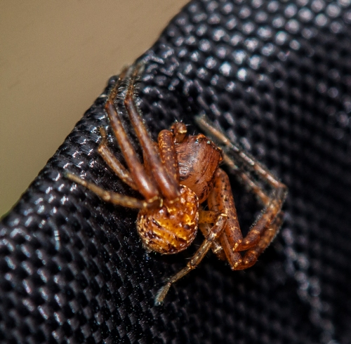 spider1_bag_blog