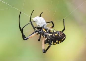 spider2_blog_hallow_blog