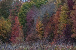 foliage1_nov_blog