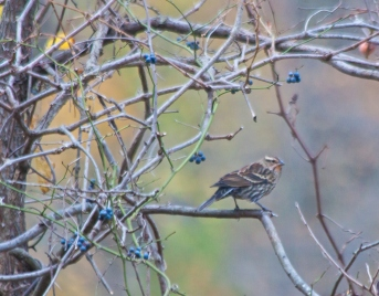 sparrow_nov_blog