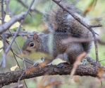 squirrel_nov_blog