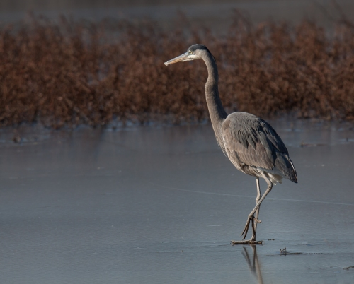 heron3_ice_blog