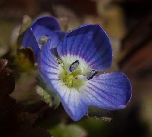 flower1a_blog
