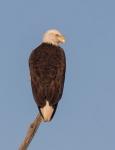 eagle2_may_sit_blog