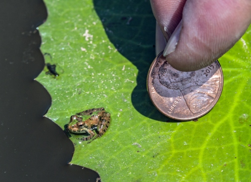 tiny2_frog_blog