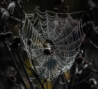 web5_oct15_blog