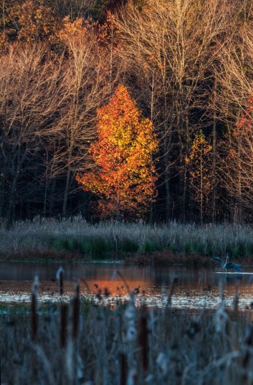fiery tree