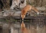 fox4_water_blog