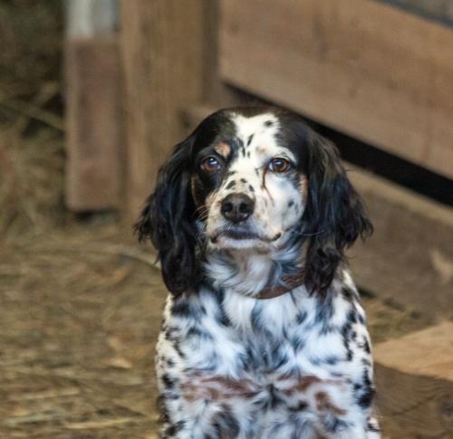 dog1_blog