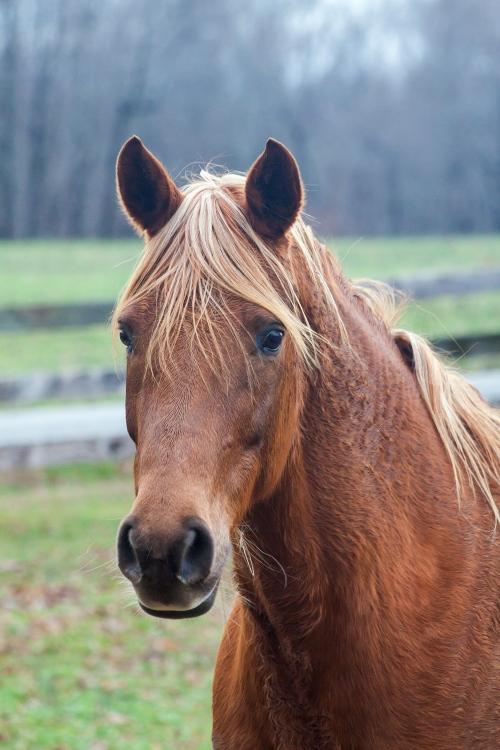 horse1_blog