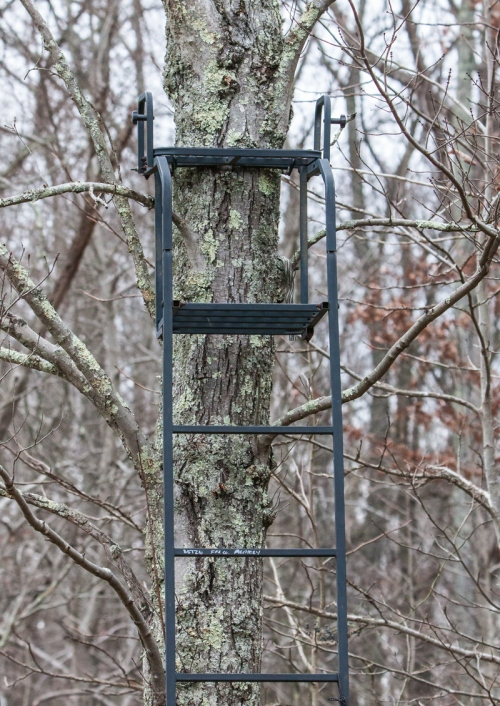 Unoccupied tree stand
