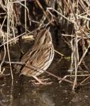 sparrow2_jan16_blog