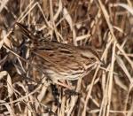 sparrow3_jan16_blog